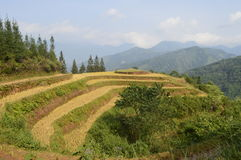 Vietnam mountains. Amazing rice fields in the mountains in northern Vietnam royalty free stock photography