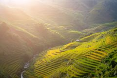 Vietnam Mu Cang Chai Beautiful rice field on terrace the mountains royalty free stock photo