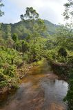 Vietnam - My Son - River, trees and jungle at My Son Sanctuary Stock Image