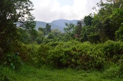 Vietnam - My Son - Trees, vegetation and jungle at My Son Royalty Free Stock Images