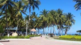 vietnam Palmträd i staden parkerar nära stranden Arkivfoto
