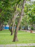 Vietnam-Park mit vielen Bäumen Lizenzfreie Stockbilder