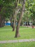 Vietnam-Park mit vielen Bäumen Stockfotos