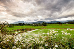 Vietnam picturesque field Royalty Free Stock Image