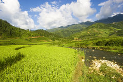 Vietnam Rice Fields. View of the lush green rolling rice paddy fields in Sapa, Northern Vietnam Stock Image