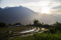 Vietnam rice fields landscape stock photo