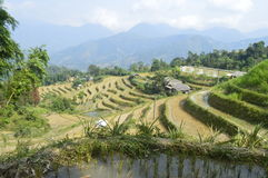 Rice fields terraced , Huang Su Phi, Vietnam. Rice fields terraced in Ha Giang Vietnam stock image