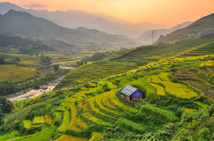 Vietnam Rice Paddy Field. Rice paddy field in Vietnam with a hut sitting on the hill Royalty Free Stock Photo