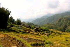 Vietnam rice paddy field Stock Photo
