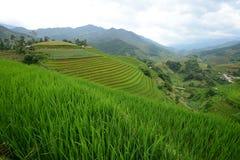 Vietnam rice terrace Royalty Free Stock Photography