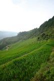 Vietnam rice terrace Stock Photo