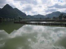 Vietnam Ricefield Stock Afbeeldingen