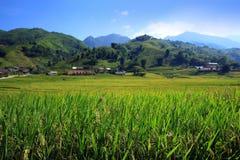 Vietnam risfält Royaltyfria Bilder