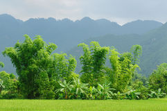 VIetnam - rural scene Royalty Free Stock Photo