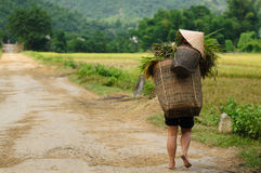 VIetnam - rural scene Royalty Free Stock Photos