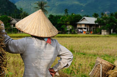 VIetnam - rural scene Royalty Free Stock Image
