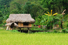VIetnam - rural scene Royalty Free Stock Photo