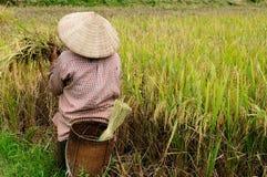 VIetnam - rural scene Stock Images