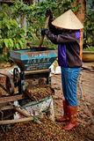 Vietnam& x27;s coffee industry. A Vietnamese farmer at the coffee indutry Royalty Free Stock Image
