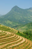 VIetnam - Sapa Rice Paddy Stock Images