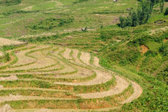 VIetnam - Sapa Rice Paddy Royalty Free Stock Photos
