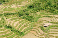 VIetnam - Sapa Rice Paddy Stock Photos