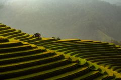 The terrace rice field on the mountain beautiful landscape view in Mu Cang Chai Vietnam royalty free stock photos