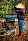 Vietnam& x27; s咖啡产业 免版税库存图片