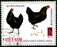 VIETNAME - CERCA DE 1968: o selo postal impresso em Vietname mostra duas galinhas pretas, uma série de galinha doméstica Fotos de Stock Royalty Free