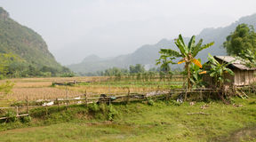 Vietnames Countryside Stock Photo