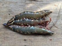 The Vietnamese black tiger shrimp, Penaeus monodon. Vietnamese black tiger shrimp, Penaeus monodon stock photos