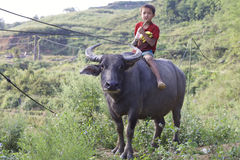 Vietnamese Child on Water Buffalo Stock Image