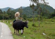 Vietnamese children riding water buffalo Royalty Free Stock Photo