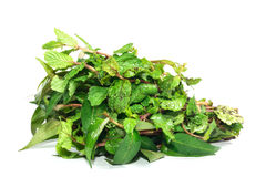 Vietnamese Coriander and mintิ Royalty Free Stock Photography
