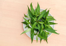 Vietnamese coriander plant. Fresh Vietnamese coriander plant in bowl and plate on wood table Royalty Free Stock Photos