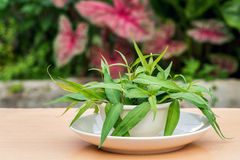 Vietnamese coriander plant. Fresh Vietnamese coriander plant in bowl and plate on wood table Stock Photo