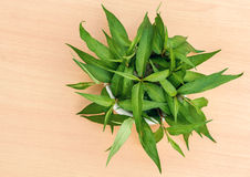 Vietnamese coriander plant. Fresh Vietnamese coriander plant in bowl on wood table Stock Images
