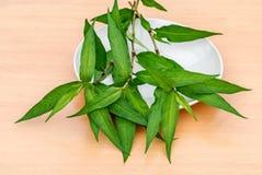 Vietnamese coriander plant. Fresh Vietnamese coriander plant in plate on wood table Stock Image