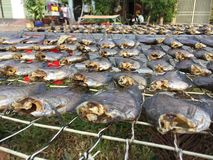 The Vietnamese cuisine: seafood - dried fish. Vietnamese cuisine: seafood - dried fish stock photo