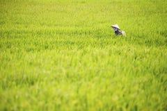 Vietnamese famer worker in rice fields at Sapa Northern Vietnam. Farmer workers walking in traditional rice fields in SAPA region, Northern Vietnam royalty free stock image