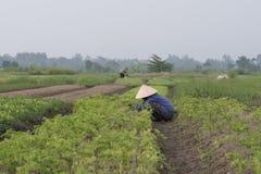 Vietnamese familie, primitieve landbouw royalty-vrije stock foto