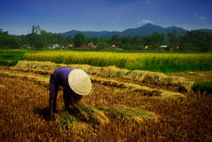 Vietnamese farmer Royalty Free Stock Images