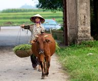 Vietnamese Farmer with buffalo Royalty Free Stock Photography