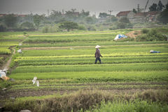 Vietnamese farmer in the feild Royalty Free Stock Image