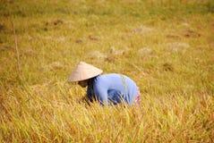 Vietnamese farmer Stock Photos