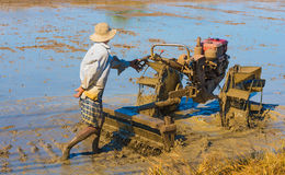 Vietnamese farmer prepares field for rice sowing Royalty Free Stock Photography