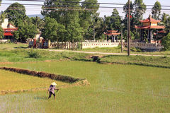 Vietnamese farmer and temple Royalty Free Stock Image