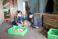 Vietnamese farmer to check egg in incubator Stock Photos