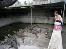 Vietnamese farmer to feed Crocodile Stock Photography