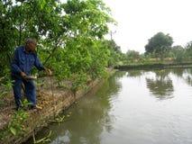 Vietnamese farmer to feed fish Royalty Free Stock Photo